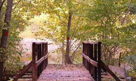 Norddjurs: Kommune opfordrer til brug af kommunale skove