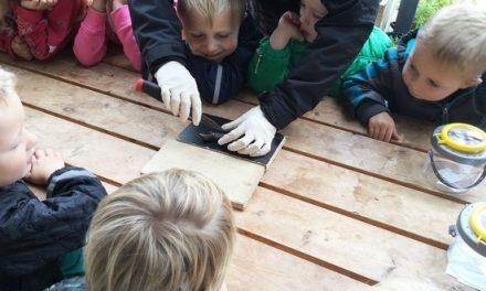 Rådne mus i Børnehuset Gassum