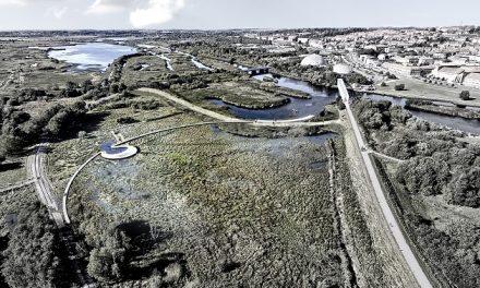 Kommunen har brug for din idé til en klimasikker by