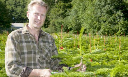 Juletræer til eksport udsolgt hos Carslund Plantage