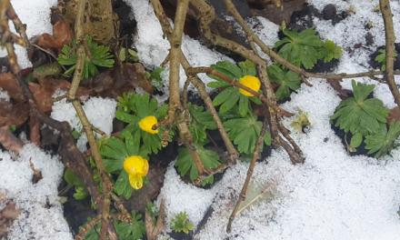 Foråret kæmper sig frem