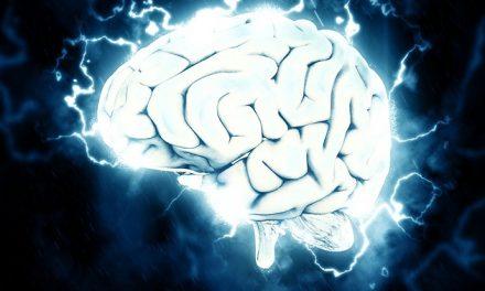 Fokus på hjernen i uge 11