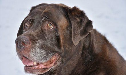 Par tiltales for dyremishandling efter opdræt af 61 hunde