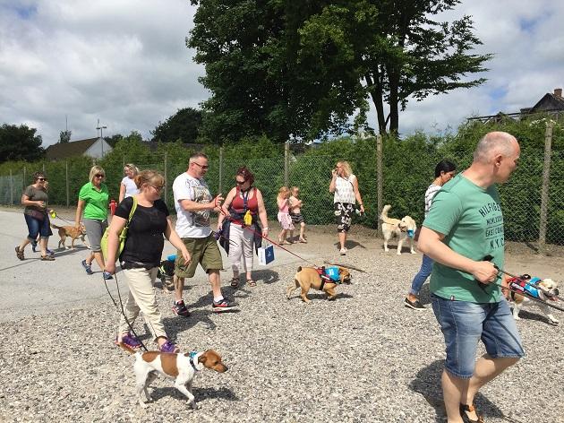 Hundeaktiviteter til fordel for udsattes kæledyr