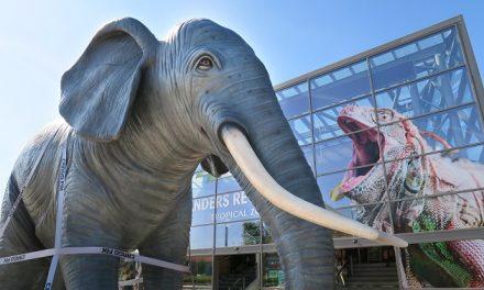 Elefant på køretur