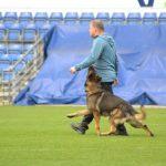 VM for schæferhunde i Randers