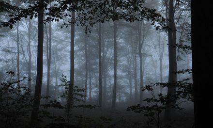 Fussingø bliver urørt skov