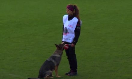 Video fra VM i schæferhunde på Bionutria Park