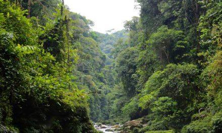 Red en regnskov og vind en rejse til Ecuador