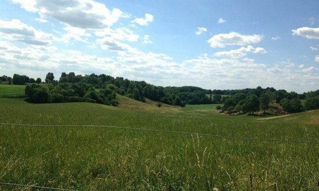Landbrugsjord skal tilbage til naturen i Læsten Bakker