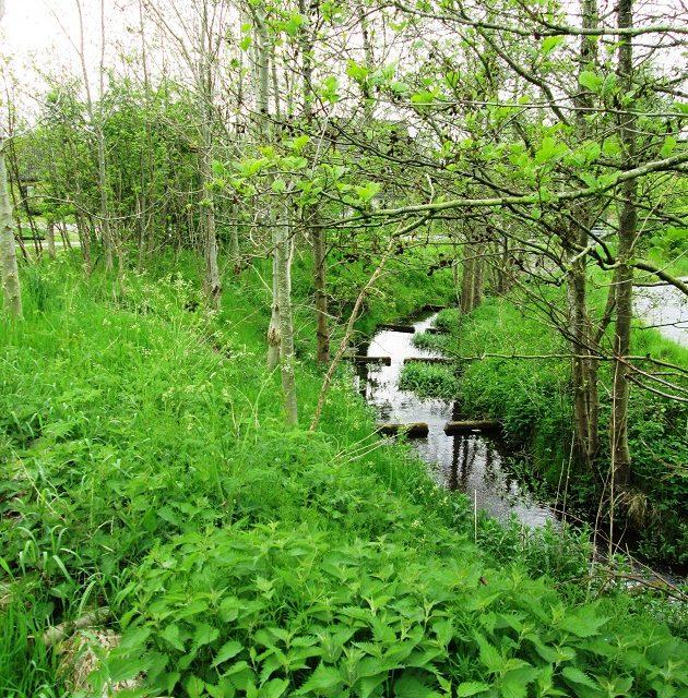 På bynær naturtur i Torup Dal