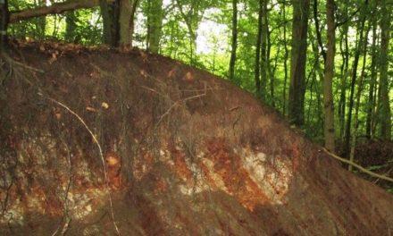 Haslund Skov – regnskoven i sydvest