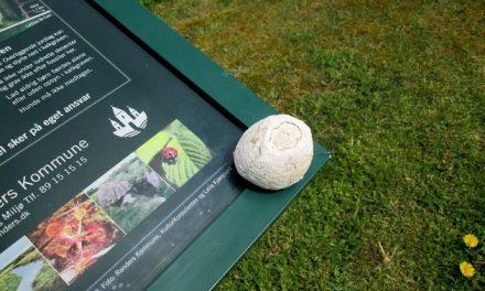 Tag på fossiljagt i Dalbyover Kalkgrav