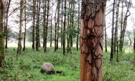 Lykkeshøj Skov klar til urnebisættelser