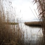 Udforsk Sødringholm og strandengene