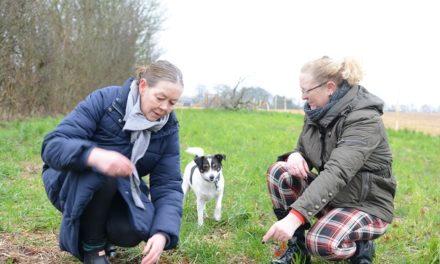 Hundevennerne i Værum får forening